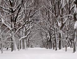 Inwentaryzacja zimową porą